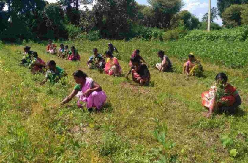 women working fruit farms indiaக்கான பட முடிவுகள்