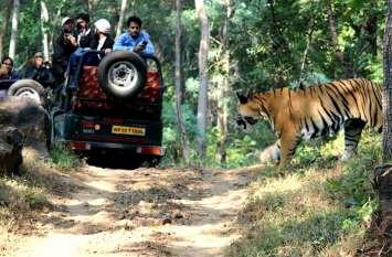वन विभाग की अभिनव पहल: अब पन्ना टाइगर रिजर्व का भ्रमण कर पर्यटन प्रेमी देंगे बाघ संरक्षण पर अपनी राय
