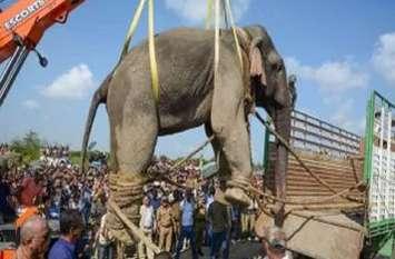 असम के हाथी बनते जा रहे हैं खूंखार, 4 साल में ले चुके हैं 359 जानें