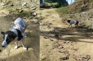 इस कुत्ते की स्वामीभक्ति की मिसाल सुन कर दंग रह जाएंगे आप