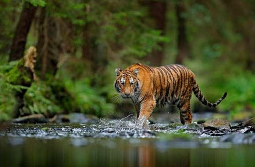 कुंभलगढ़ टाइगर रिजर्व का दुबारा प्रस्ताव तैयार, कुछ संशोधन के साथ भेजा जाएगा