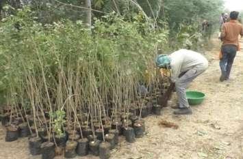 पौधरोपण में जाँच से पहले वन विभाग के अधिकारीयों ने फिर कराया पौधरोपण