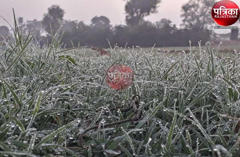 यहां मौसम ने बदला मिजाज : आसमां में छाई धुंध, तो खेतों में पत्तों पर दिखी ओस की बूंदें