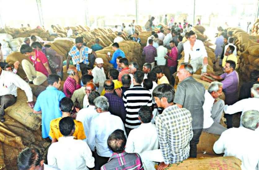Gujrat News : एक महीने में ४४२६ किसानों की मूंगफली खरीदी, ३९६ की रिजेक्ट