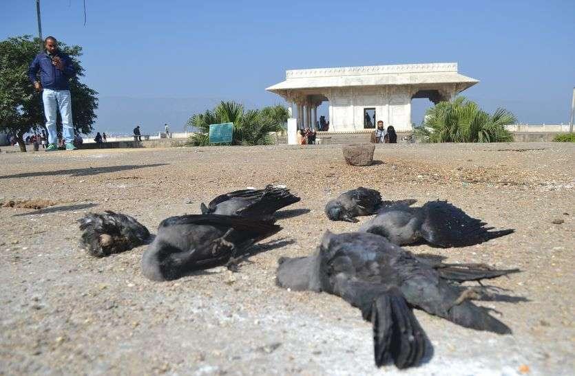परिन्दों पर कहर : आनासागर झील किनारे 6 और कौए मृत मिले