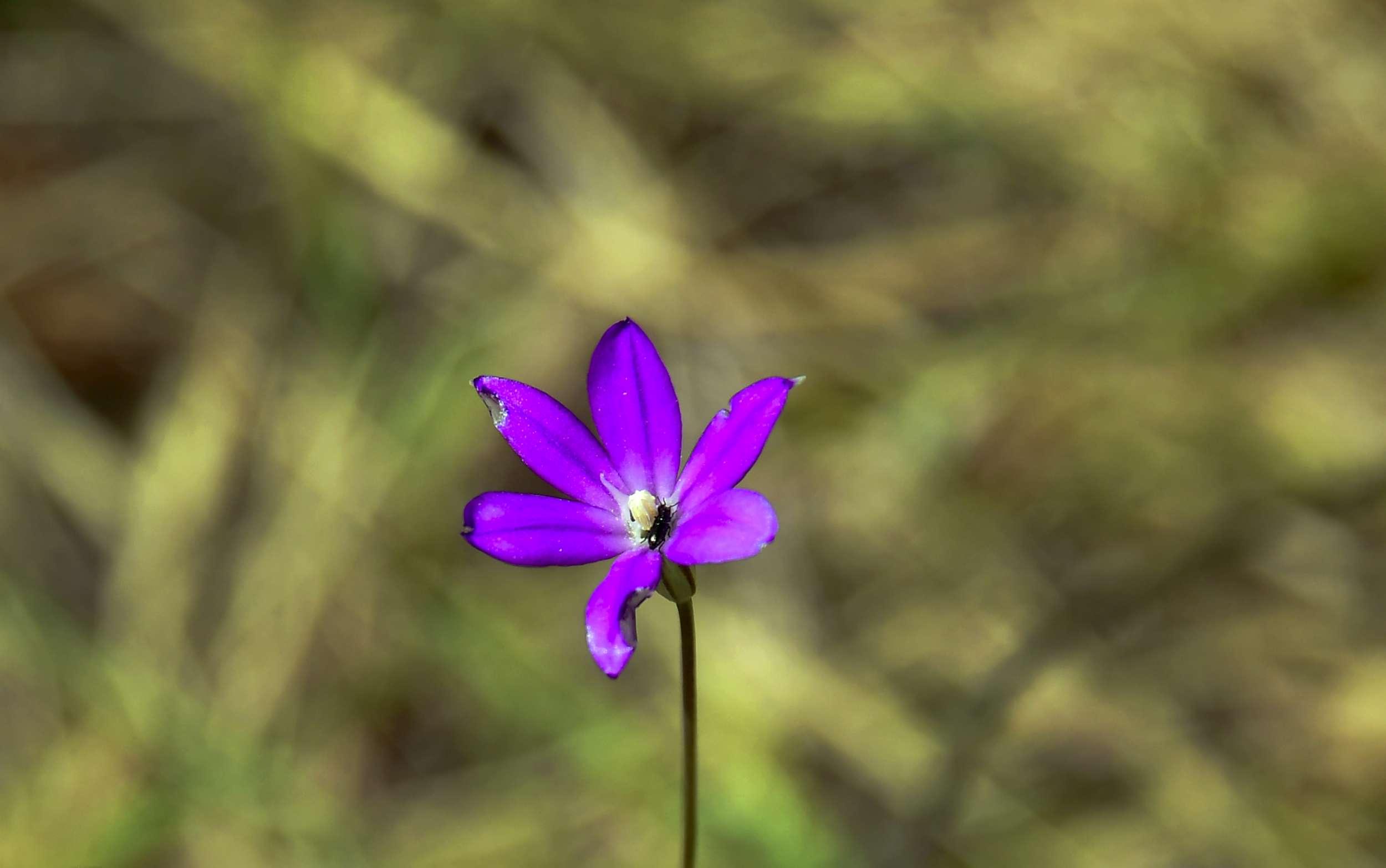 बीते 250 सालों में 600 पौधों की प्रजातियां पृथ्वी से हो गईं लुप्त