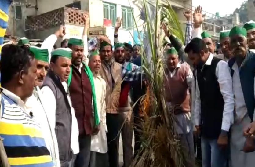 किसान यूनियन ने चौराहे पर जलाया गन्ना, ज्ञापन सौंपकर दी यह बड़ी चेतावनी- देखें वीडियो