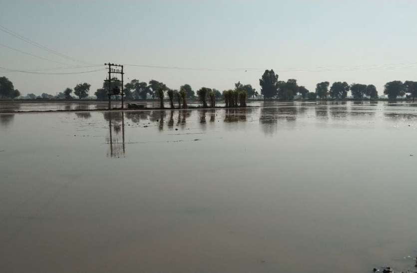 अस्थाई एसटीजी नहर टूटी, पचास बीघा भूमि जलमग्न, बिजाई प्रभावित