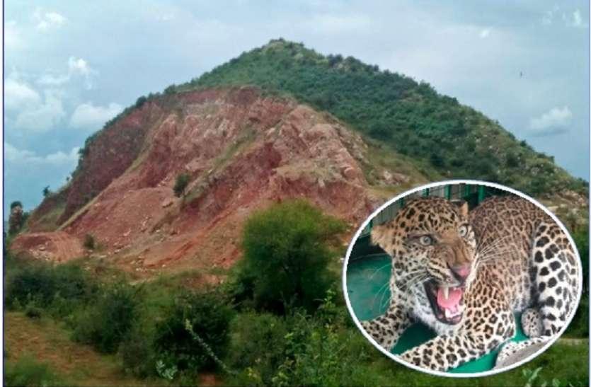 जंगल से आबादी में भटक रहे वन्यजीव, मानव जीवन को खतरा