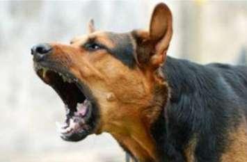 आवारा कुत्तों ने दर्जन भर बच्चों को बनाया अपना शिकार, स्वास्थ्य विभाग में मचा हड़कंप- देखें वीडियाे