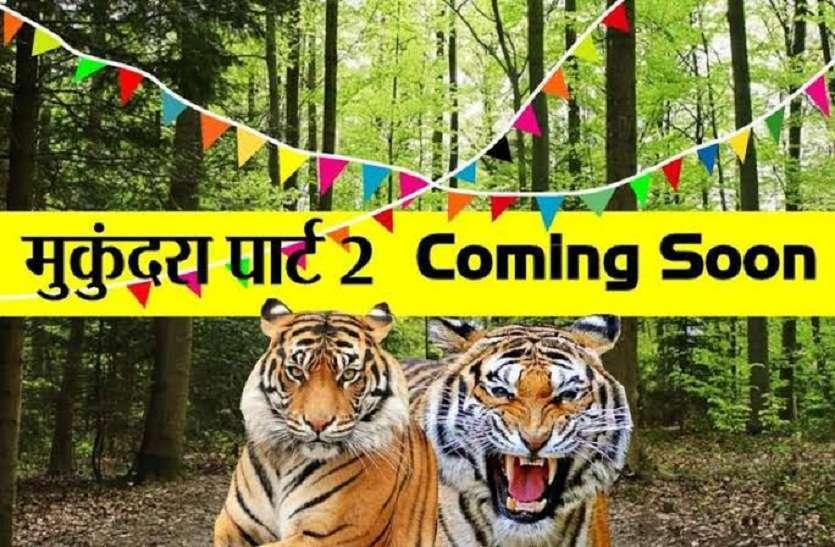 कभी भी मुकुन्दरा की तरफ बढ़ सकते हैं रणथंभौर के बाघ, मुख्य वन संरक्षक ने वन अधिकारियों को दी हिदायत