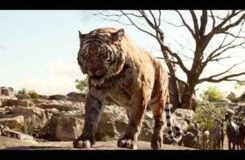 बाघ की दशहत ऐसी की किसानों ने खेत पर जाना छोड़ा