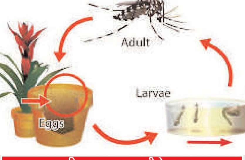 डेंगू का पूरी तरह खात्मा मुश्किल : मलेरिया अधिकारी