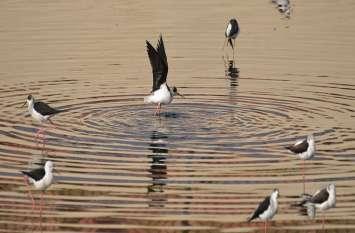 द्रव्यवती नदी में बन रहा है पक्षियों का नया ठिकाना