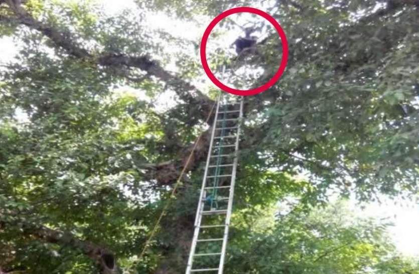 मायके गयी रूठी पत्नी को मनाने के लिए पेड़ पर चढ़ गया पति, काफी मशक्कत के बाद पुलिस ने उतारा नीचे