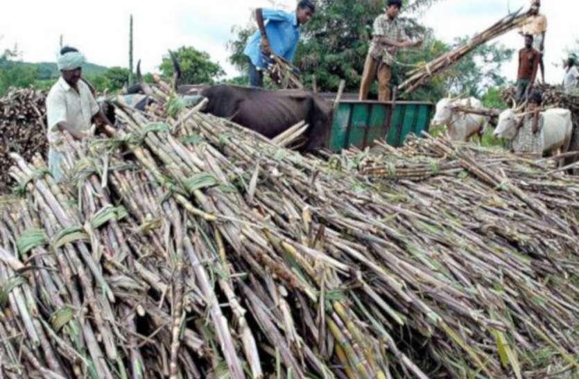 गन्ना किसानों की परेशानी में लगातार इजाफा, फिर से 20 हजार करोड़ रुपए हुआ बकाया