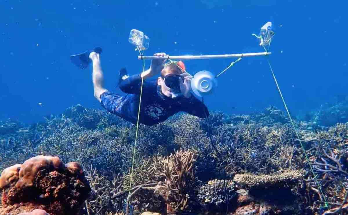 मृत प्रवालों को लाउडस्पीकर से स्वस्थ प्रवालों की ध्वनि सुना कर रहे इलाज