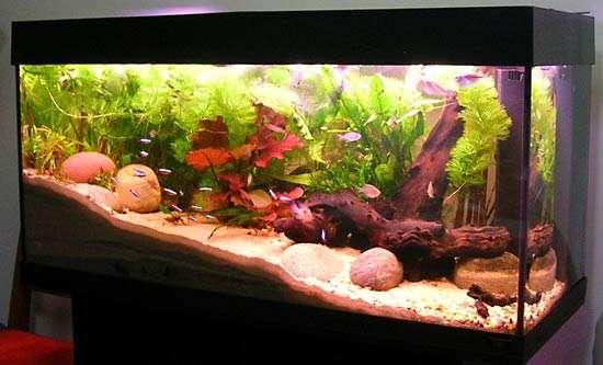 fish_aquarium1.jpg