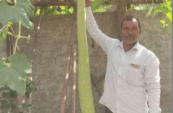 किसान ने घर में उगाई 5 फीट की लौकी, बनी आकर्षण का केंद्र