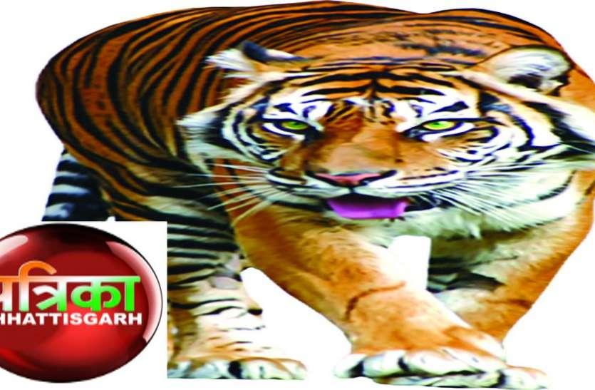 बाघों के संरक्षण के लिए छत्तीसगए़ को मिली 3.57 करोड़ की पहली किश्त