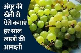 अंगूर की खेती से कमाएं हर साल लाखों की आमदनी, जाने कैसे