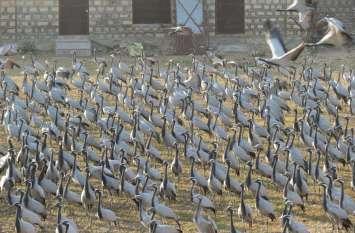WILDLIFE STORY : फिसलते पारे के बीच पक्षियों की संख्या में हुआ इजाफा