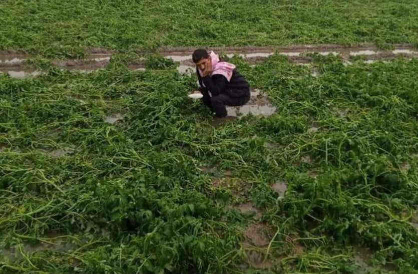 VIDEO: ओलावृष्टि ने बदल दी फसलों की सूरत, बढ़ने लगी किसानों के दिल की धड़कनें