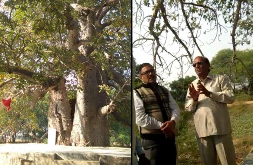 दुर्लभ कल्प वृक्ष को बचाने की मुहिम शुरू