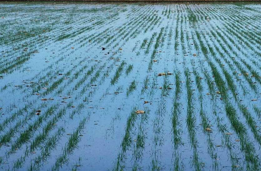 इंसानों की तरह ही फसलों की सेहत भी खराब करता है प्रदूषित पानी