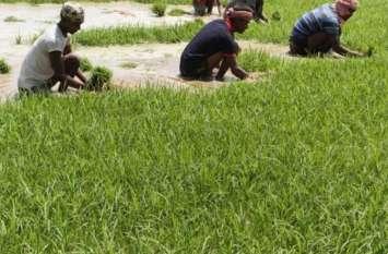 Agriculture : ओडिशा सरकार ने नई कृषि नीति को दी मंजूरी
