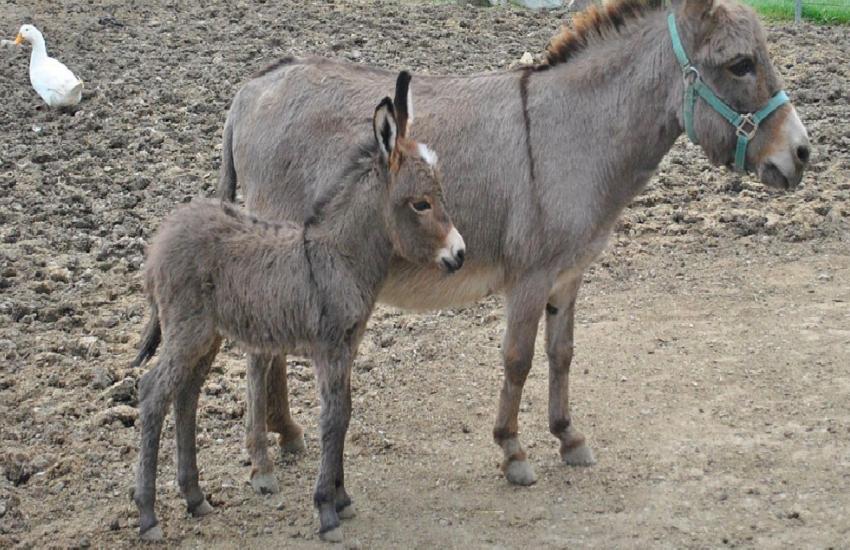 donkey1.png
