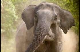 लॉकडाउन के बीच शहर के करीब आ गए जंगली हाथी, एक महिला घायल