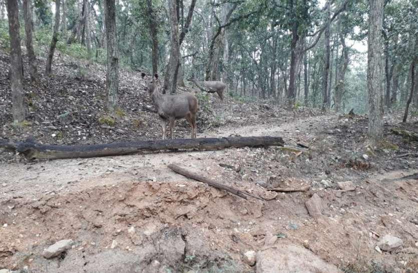 वन्यजीवों पर शिकारियों की नजर,मुकंदरा सहित वन क्षेत्रों में रहेगी विशेष नजर