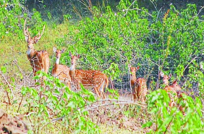 छोटी-छोटी पहल से संभव है प्रकृति संरक्षण