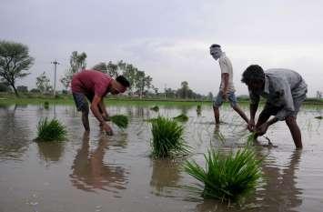 Agriculture : पंजाब में धान के बजाय दूसरी फसल पर जोर