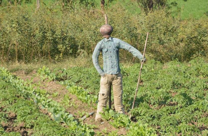 भईया इते बगैर बिजूका के खेती नईं होत