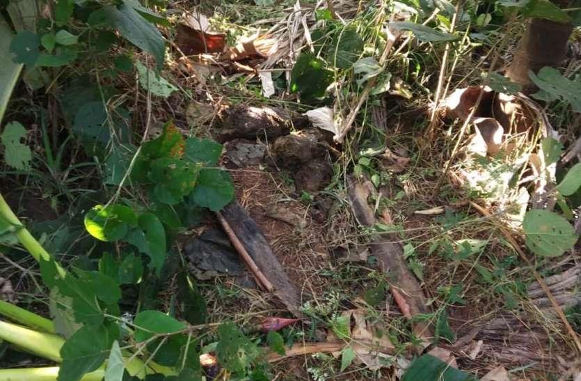 हाथियों के झुंड ने खड़ी फसल को किया बर्बाद