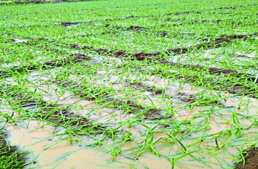 बारिश से खेतों और घरों में भरा पानी