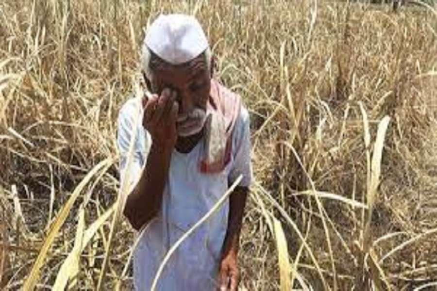 महाराष्ट्र में 300 किसानों ने किया सुसाइड, इसके पीछे का कारण जानिए यहां...