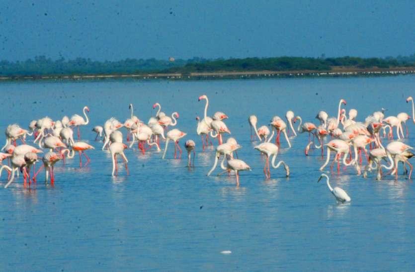 Tamilnadu तीन दिवसीय फ्लेमिंगो फेस्टिवल शुरू