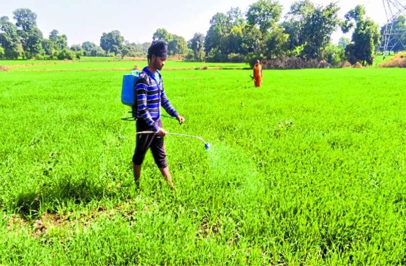 किसानों की फसल तबाह