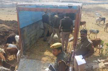 मिर्जापुर में ट्रक से 20 गोवंश बरामद, पुलिस को चकमा देकर फरार हुए तस्कर