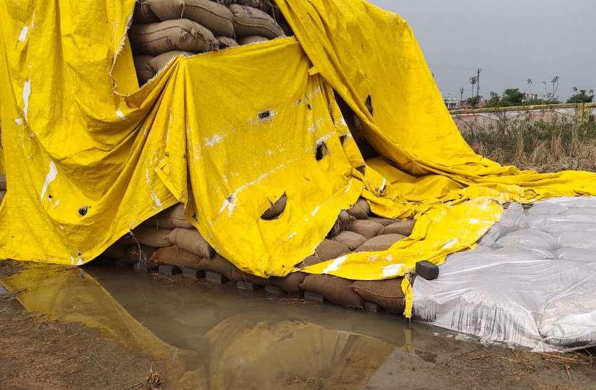 बेमौसम बारिश से भीगा करोड़ों का धान, अधिकांश केन्द्रों में खरीदी बंद
