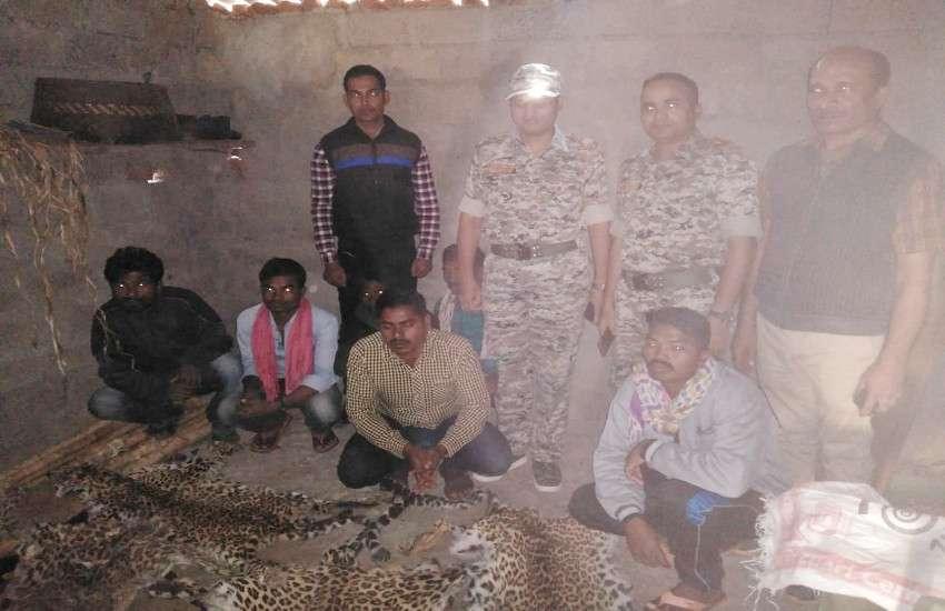 चार तेंदुए की खाल तस्कर कर रहे 7 आरोपियों को वन विभाग ने दबोचा, देखें फोटो