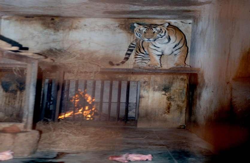 बाघ व शेर के पिंजरों में अलाव, पक्षियों के पिंजरों के चारों ओर लपेटी कनात