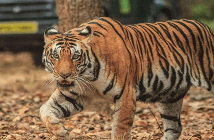 राजस्थान में वन विभाग की सख्ती से उखड़े तस्करों के पांव, जंगलों को अब आया सुकून