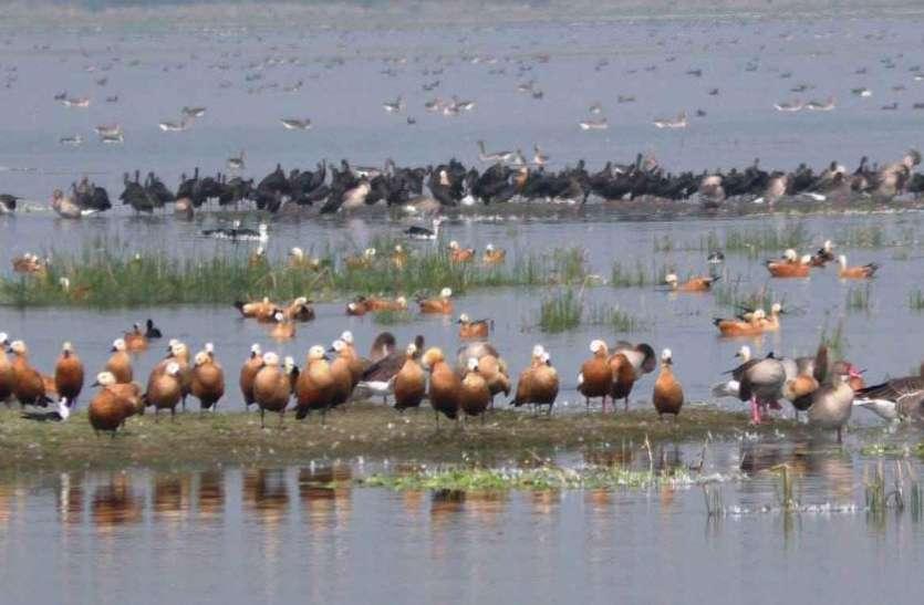 विदेशी पक्षियों के कलरव से गूंजे खीजडिया अभ्यारण्य व वढवाणा तालाब