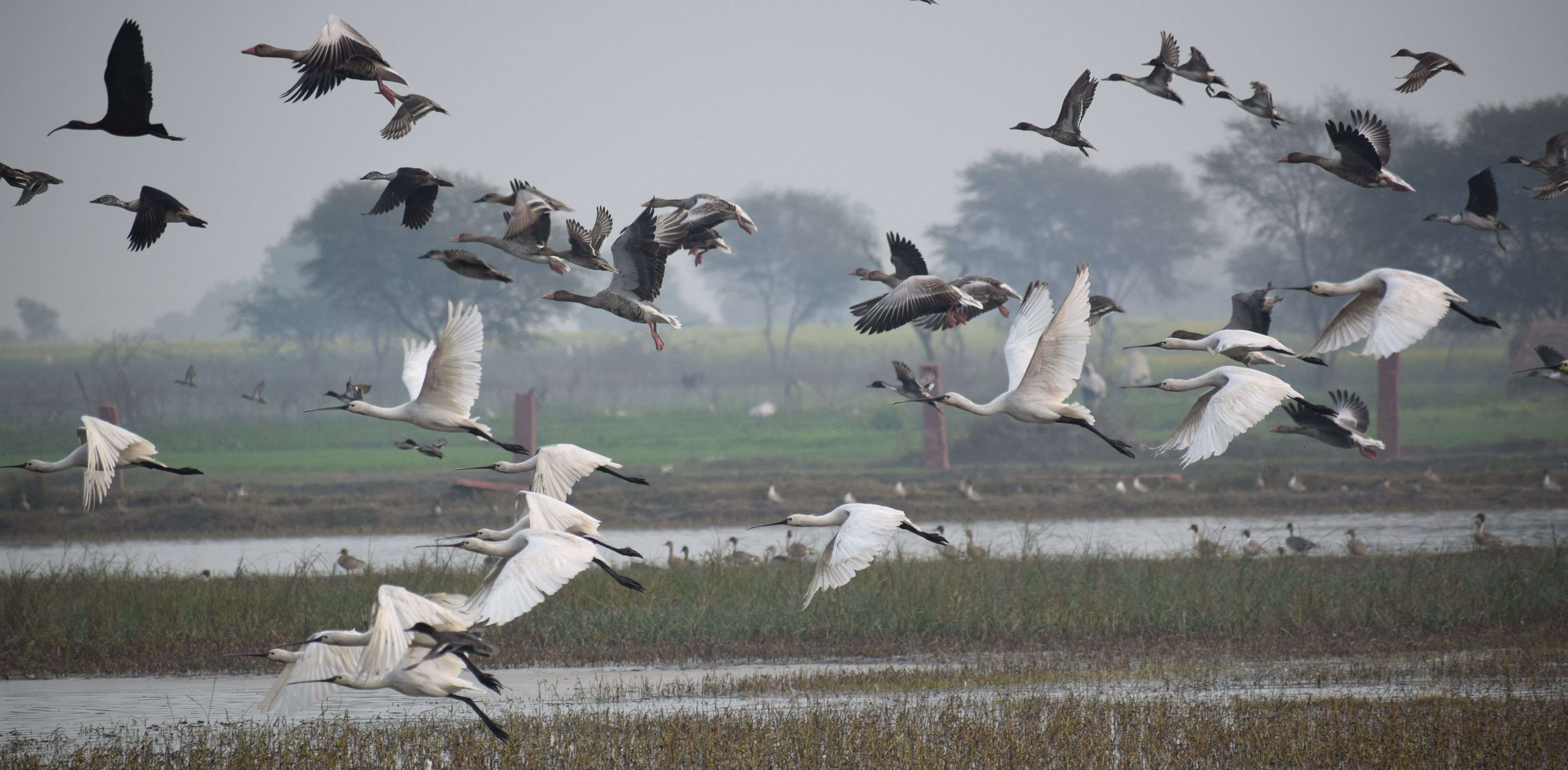 Taal talaiya is buzzing with the tirade of the guest birds See photos