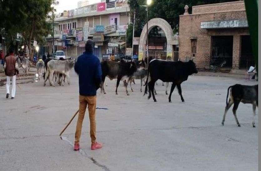 अवैध केबिन पर चला पालिका का डंडा, आवारा पशुओं को गोशाला के सुपुर्द किया