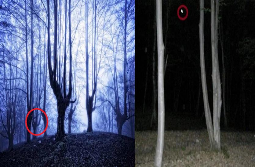 ये है दुनिया का सबसे डरावना और रहस्यमय जंगल, एक बार जो अंदर गया फिर कभी नहीं आता लौटकर वापस!